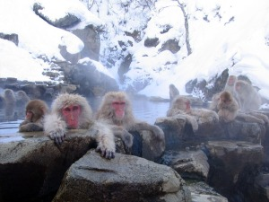These Japanese Macaques have the right idea!